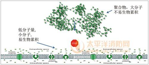 图16高分子聚合物阻燃剂与小分子阻燃剂生物累积性对比